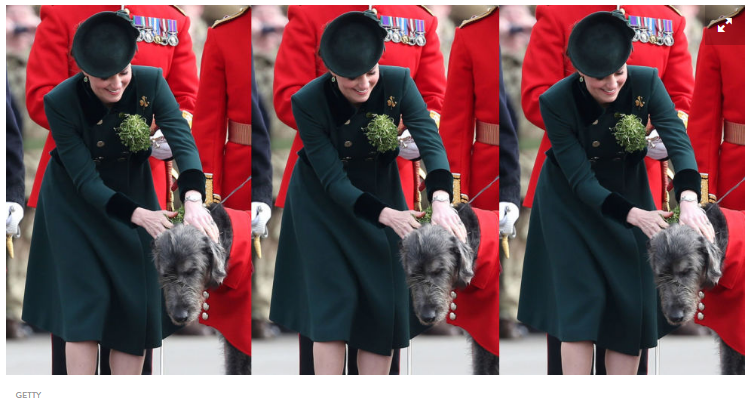 If theres one thing Duchess of Cambridge gets excited about its pups