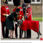 Petting Domhnall during the annual Irish Guards St Patricks Day Parade