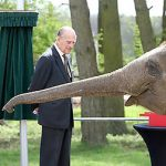The Queen and Prince Philip met Donna the elephant Photo C GETTY IMAGES