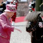The monarch who has a lifelong love of horses reached out to pet the ponys nose