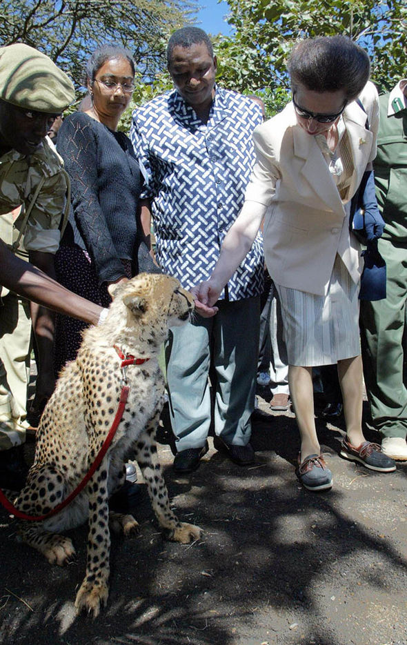 The Princess visited Kenya again in 2004 where she petted an adult cheetah Photo (C) GETTY