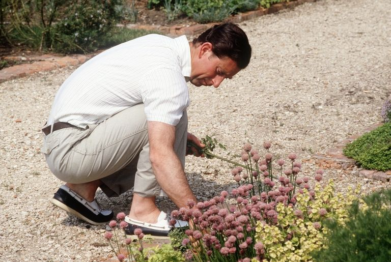 Prince Charles weeding his herb garden. Photo (C) GETTY
