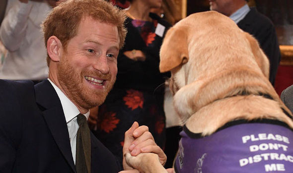 Prince Harry received a welcome kiss from Cooper, a two-year-old assistance dog Photo (C) JAMES WHATLING