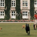 The Queen and her corgis at Balmoral. Photo C GETTY