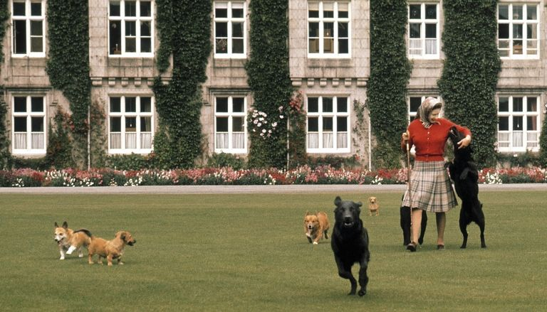 The Queen and her corgis at Balmoral. Photo (C) GETTY