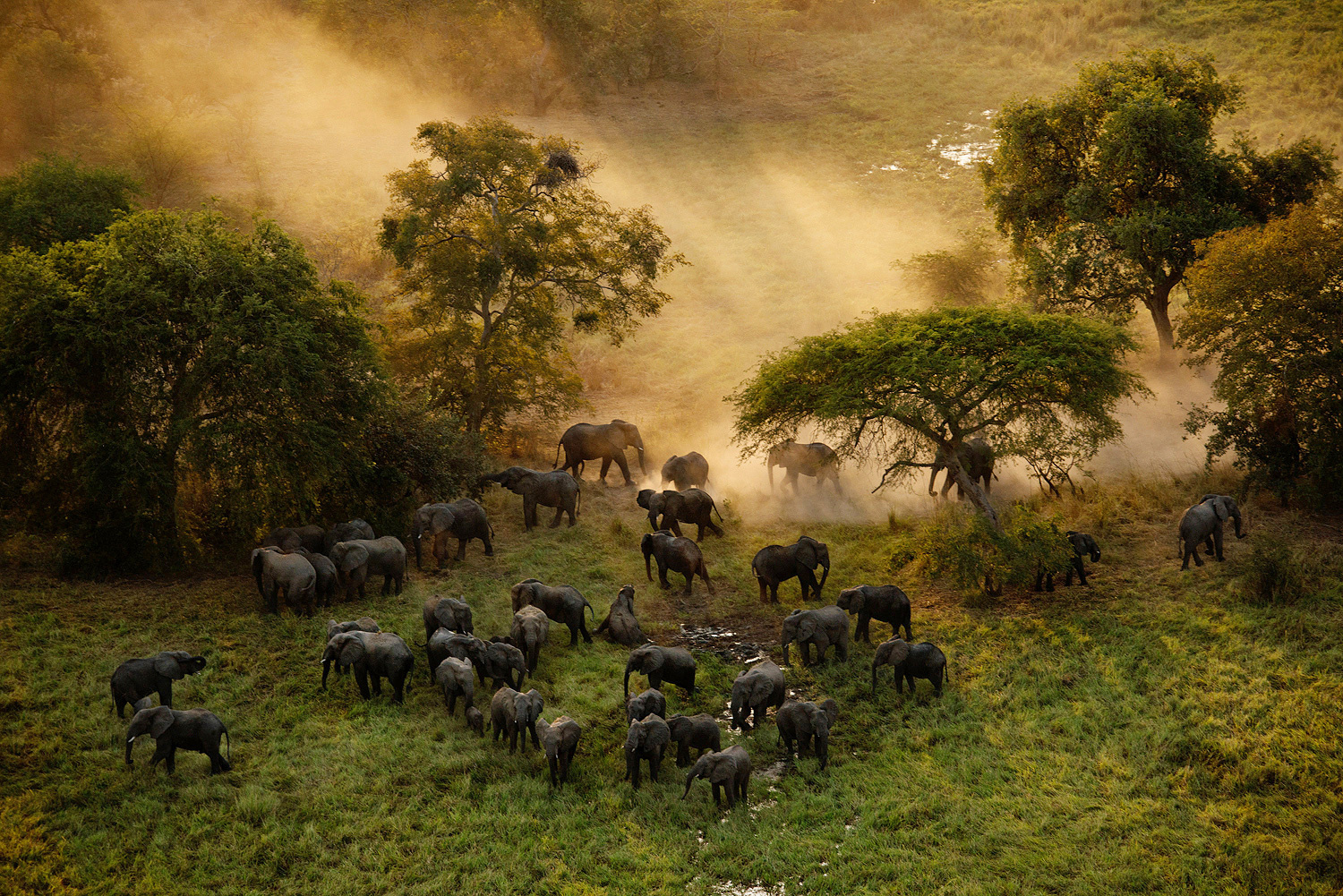 The elephant population in Zakouma National Park in Chad plummeted from approximately 4,000 in 2005 to just 450 in 2010 due to massive poaching.