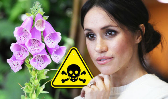 Meghan Markle Wedding to Prince Harry bouquet flowers could cause diarrhoea Photo (C) GETTY
