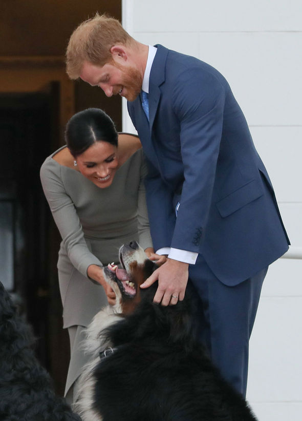 Meghan and Harry have began growing their family with the addition of a furry friend (Image Getty Images)