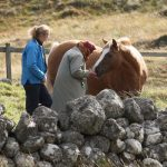 Her Majesty was spotted feeding treats to one of her horses on the Balmoral Estate (Image Peter Jolly REX Shutterstock)