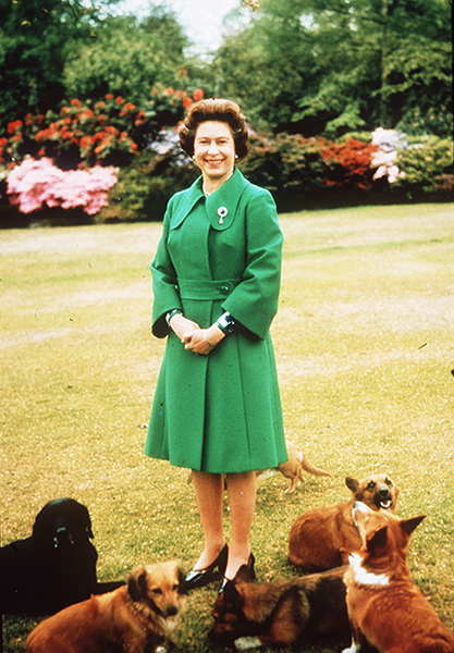 The Queen has been surrounded by her dogs for years Photo C GETTY