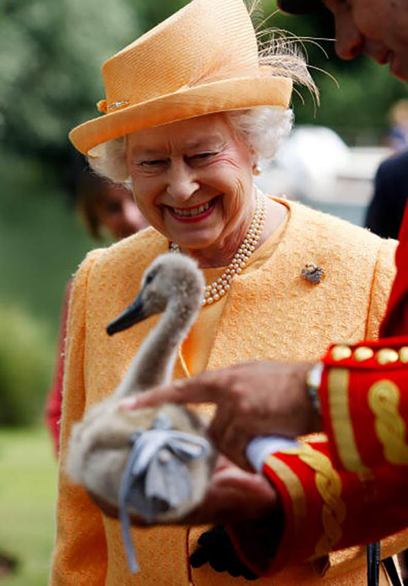 Queen Elizabeth II The Queen takes part in an annual swan upping Image GETTY