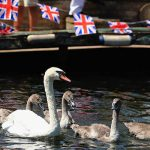 Queen Elizabeth II owns all unmarked swans Image GETTY