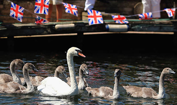 Queen Elizabeth II owns all unmarked swans Image GETTY