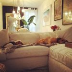 Meghan posted this cute snap of her pooches snoozing on the sofa Image Instagram