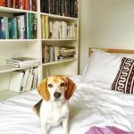 Meghans dog relaxes in one of the bedrooms at her former home Image Instagram