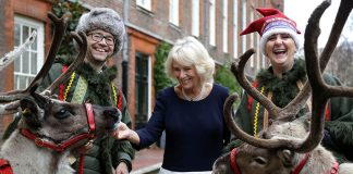 The Duchess of Cornwall borrows Santas reindeer for festive fun Photo C GETTY
