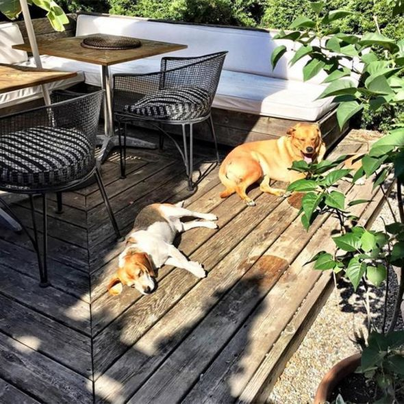 The backyard terrace provided the perfect spot for sunbathing for both Meghan and her pets Image Instagram