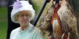 The Queen told artist Lucian Freud of a rather dramatic episode at a pheasant shoot Image Getty