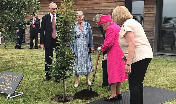 The Queen refused help as she planted a tree in Cambridge Image TWITTER•RICHARDPALMER
