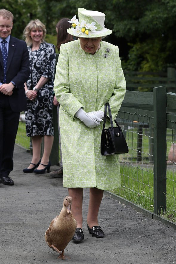 The Queen was in her element as the duck waddled in front of her Image PA