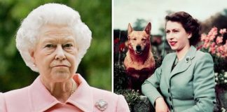 Queen snub The Queen has become known for her love of corgis Image GETTY