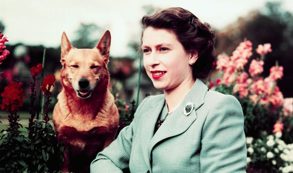 Royal Balmoral bombshell The Queen has had more than corgis in her life Image GETTY