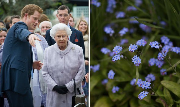 Prince Harry presented the Queen to his 'Forget-me-not' garden display for his charity Sentebale in 2013