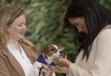 Meghan Markle dog name Harry Meghan pet rescue dog