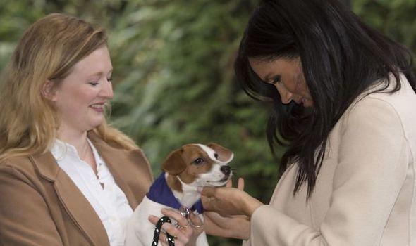 Meghan Markle dog name Harry Meghan pet rescue dog