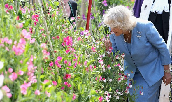 Camilla, Duchess of Cornwall smells Sweet Peas during a visit to Saumarez Park on July 19, 2012 in St Peter's Port, United Kingdom