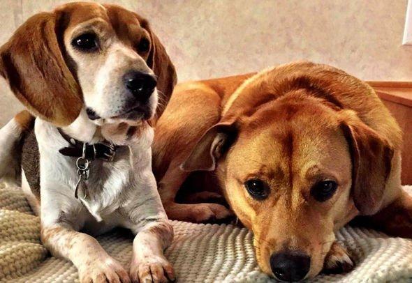 Meghan Markle's dogs Guy and Bogart