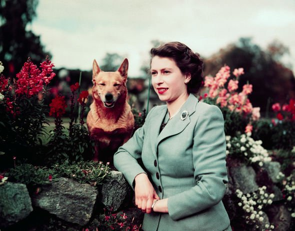 The Queen with her pet Corgi